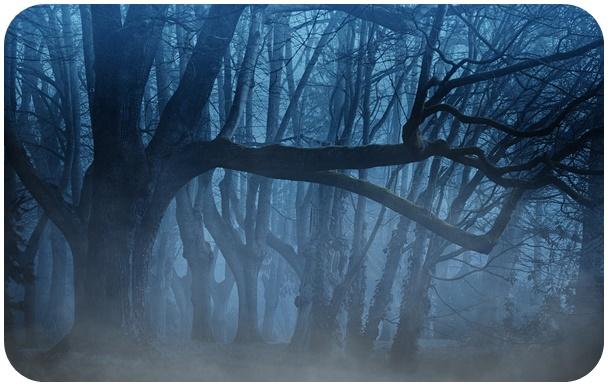 "alt=""forest"""