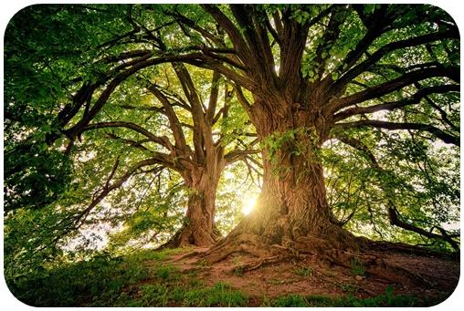 """alt=""""tree-3822149_960_720"""""""