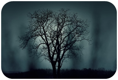 "alt=""Baum nachts"""