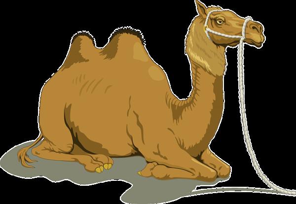 """alt=Kamel"""""""